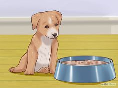 Weaning Puppies Over To Puppy Food