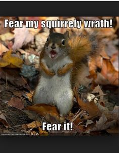 Funny little squirrels.