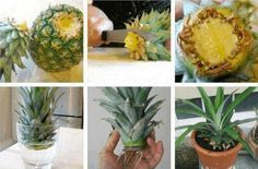 10 légumes à faire repousser chez soi à l'infini