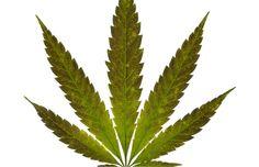 Former Head of RCMP Drug Squad Now Heads National Marijuana Business #cannalovers #cannabis #canna #welovecannabis #lovecanna