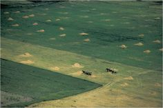 Korniss Péter Folk Art, Grass, Mountains, Nature, Travel, Photography, Naturaleza, Viajes, Popular Art