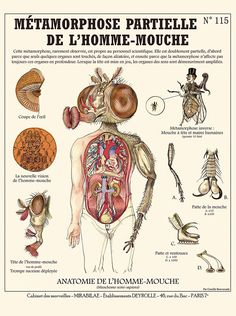 Metamorphosis of the human fly / The Fly print - cabinet of curiosities by the artist Camille Renversade Deyrolle poster Mythological Creatures, Fantasy Creatures, Mythical Creatures, Image Fun, Fantastic Beasts, Paris, Fantasy Art, Poster Prints, The Fly
