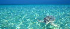 Grand Cayman Islands... great trip!