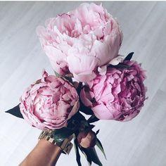 "flowersfromabove: "" Peony Season by: @sib.c…"