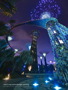 Took this shot from marina bay singapore. These 25-50 metres tall trees have large canopies that provide shade in the day and come alive with an exhilarating display of light and sound at night.