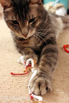 I tie small leftover pieces of yarn to pipe cleaners for Tig. He loves pipe cleaners, better than cat toy out there.
