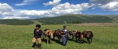 """A remarkable horse trekking tour named """"Following the footsteps of Genghis Khan"""". The trip goes back to the 13th Century and experience the life of a Mongolian legend. There is no better way to explore Mongolia on horseback.  Genghis Khan conquered lands riding his 8 light bay horses, which none of his entourage were allowed to touch. But at this time, his geldings are waiting just for you in Khentii National Park- a beautiful combination of fores ..."""