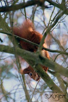 Eichhörnchen ...nanu... was is denn da? Foto by Dara Morgen
