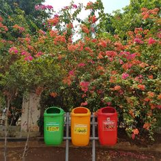 plant flower tree outdoor and natureYou can find Compost and more on our website.plant flower tree outdoor and nature
