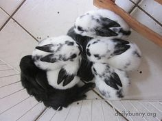 Baby bunnies prefer to nap all together - April 10, 2014