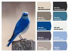 ColorSnap by Sherwin-Williams – ColorSnap by Rachel C. Paint Walls, Paint Stain, Blue Color Wheel, Sherwin Williams Color Palette, Texas Homes, Periwinkle, House Painting, Hgtv, Seas