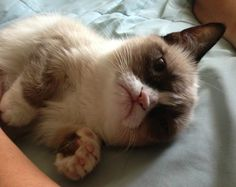 Grumpy Cat's name is Tartar Sauce.....that is the best name EVER!!!!  and it is a girl.  WITTLE FACE!!!!