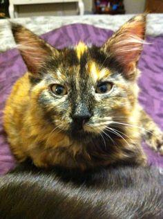 Scout Cat | Pawshake