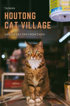 Taiwan | Houtong Cat Village | Easy day trip from Taipei | Planning a trip to Taipei? One of the most amazing day trips to take from the capital, is a visit to Houtong Cat Village! Spend the day frolicking with cats, learn about Taiwan's gold mining history and enjoy some 'oh so delish' street food. #taiwan #taipei #houtongcatvillage #daytrip #aroundtaipei