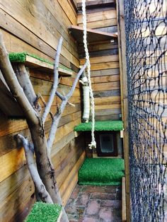 DIY cat enclosure, using pallet wood and branches