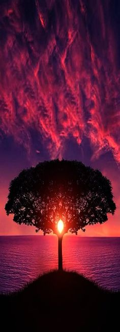 Tree of Life at Sunset... By Artist Unknown... Sometimes A Picture Can Be…