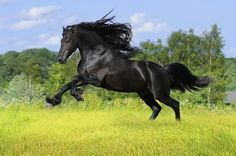 Freedom, Challenge, Courage, Awesome, horse, hest, running, speed, wild, trees, grass, shiny, free, animal, beautiful, cute, nuttet, photo.