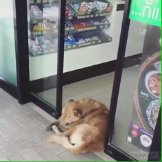 That's me on Monday - Funny Animals Cute Funny Animals, Cute Baby Animals, Animals And Pets, Cute Animal Videos, Funny Animal Pictures, Funny Dog Videos, Funny Dogs, Cute Puppies, Cute Dogs