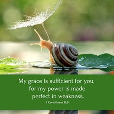 "But he said to me, ""My grace is sufficient for you, for my power is made perfect in weakness."" Therefore I will boast all the more gladly of my weaknesses, so that the power of Christ may rest upon me.  2 Corinthians 12:9"