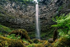 Watson Falls hurtles over a cathedral amphitheater wall of basalt, crashing into a long talus slope covered in moss and vine maple. At 272 feet, Watson Falls is the 3rd tallest waterfall in Oregon.