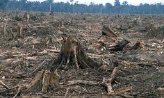 Deforestation—the permanent destruction of forests in order to make the land available for other uses.This is a cleared forest in Riau province, Sumatra, Indonesia. Rainforest Deforestation, Deforestation Facts, Rainforests, Smart Balance, Amazon Rainforest, Environmental Issues, Endangered Species, Endangered Elephants, Global Warming