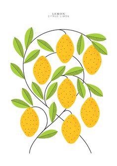 Citrus - - - - Sarah Abbott - - -