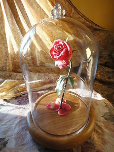 Beauty and the Beast Rose!