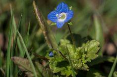 Das kleine Blaue - the little blue.
