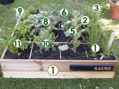 Scène de potager : Un carré d'aromatiques (Scènes de jardins)