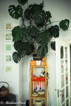 "the-world-in-gardens: "" Bookshelf plants. 