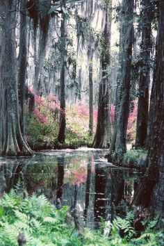 Autumn, Cypress Gardens, Florida - imagine the new Earth promised in the bible looking better than this! All Nature, Amazing Nature, Beautiful Nature Photos, Nature Source, Cypress Gardens Florida, Places Around The World, Around The Worlds, Places To Travel, Places To Visit