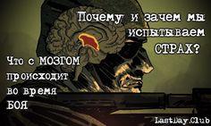 Что происходит с мозгом во время боя   LastDay Club image 21 Master Chief, Brain, War, Club, Fictional Characters, The Brain, Fantasy Characters