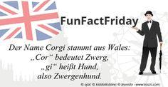 """#FunFactFriday bei THE BRITISH SHOP: Der Name """"Corgi"""" stammt aus Wales: """"Cor"""" bedeutet Zwerg, """"gi"""" heißt Hund - also Zwergenhund."""