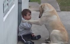 Gentle Yellow Lab Befriends Little Boy with Down Syndrome | BarkPost