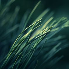 soft, dry grass blades.