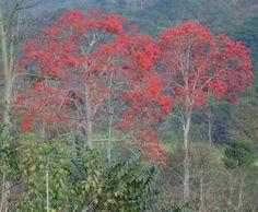 fotos de arboles venezolanos