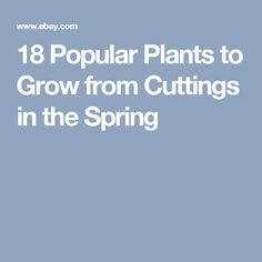 18 Popular Plants to Grow from Cuttings in the Spring