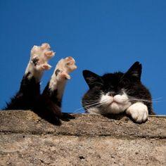 Ah! The life of a cat!