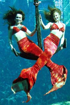Mermaids from Weeki Wachee Springs State Park.  I have always thought this was so cool and want to see them in person someday!