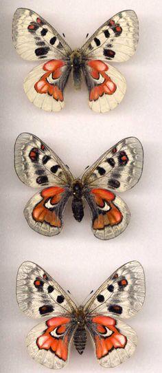 Same species(?) - different markings