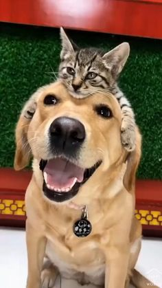 Cute Funny Dogs, Cute Funny Animals, Cute Cats, Adorable Dogs, Cute Animal Videos, Cute Animal Pictures, Tier Fotos, Cute Little Animals, Cute Creatures