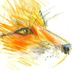 Fox by Tony Baker