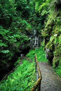 A long flight of stairs through the forest leads to the Cladagh River entrance…