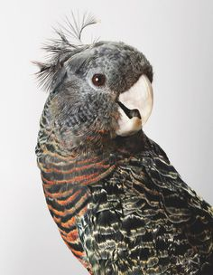 beautiful bird with ivory colored beak - #parrot