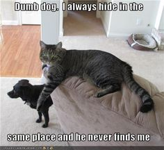 funny dog pics with captions | funny pictures of cats with captions