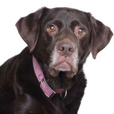 Senior Dog Health Care - PetCareRx