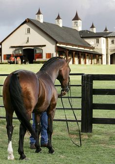 1000 Images About Ntx Horse Country Usa On Pinterest