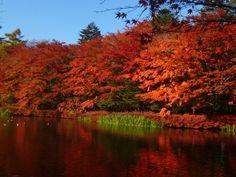 秋の雲場池