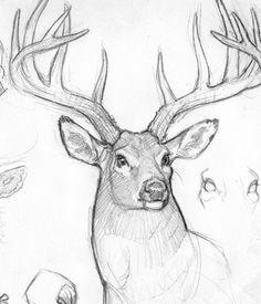 Anthony VanArsdale Sketchbook