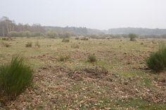 Naturpark Bergisches Land Das gibt es zu sehen: - Die Wahner Heide nördlich von Köln ist das artenreichste Naturschutzgebiet in…